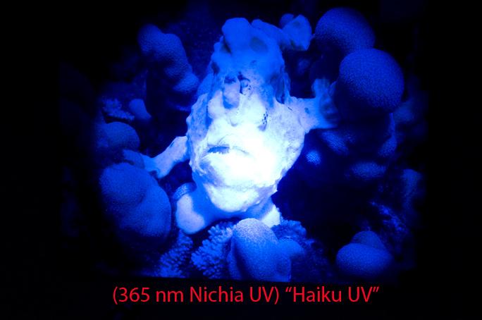 Haiku-UV.jpg
