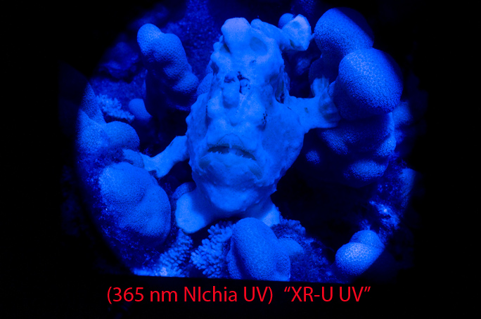 XR-U-UV.jpg